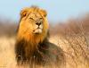 Мастер-класс «Путешествие в Африку»