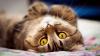 Мастер-класс «Котенок в ромашках»