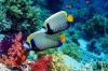 Мастер-класс «Рыбки плавают в водице»