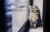 Мастер-класс «Котенок в окне»